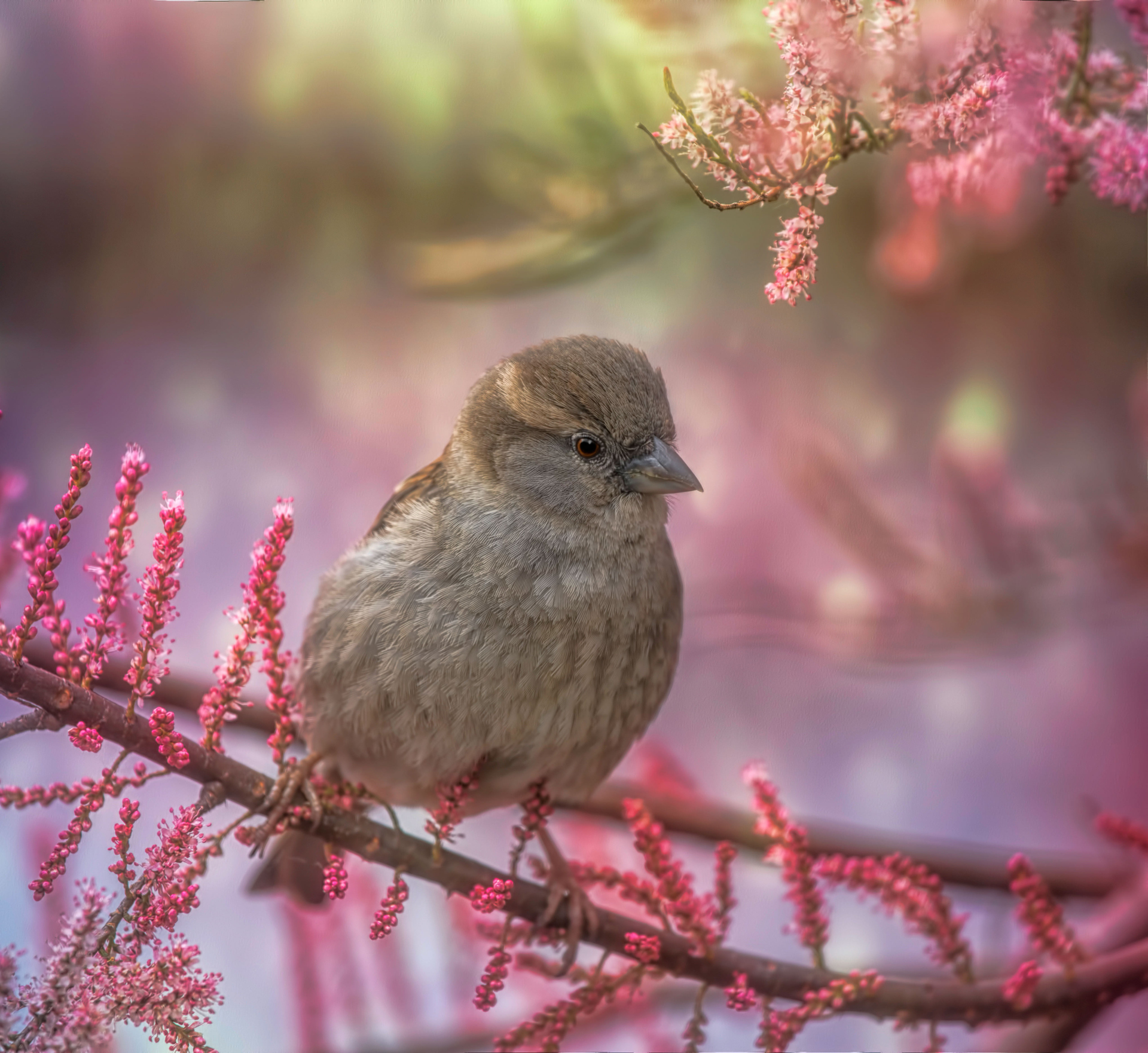 just a simple sparrow by Aya de Ruiter – Downloaded from 500px