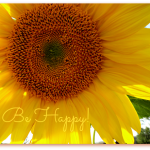 sunflower be happy
